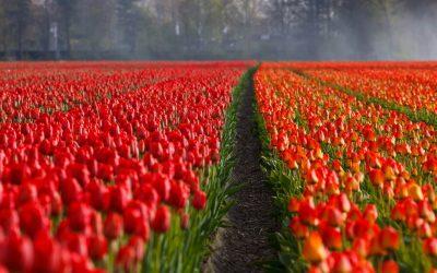Czy łatwo znaleźć sezonową pracę w Holandii?