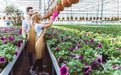 Praca w Holandii dla par – gdzie szukać ofert?