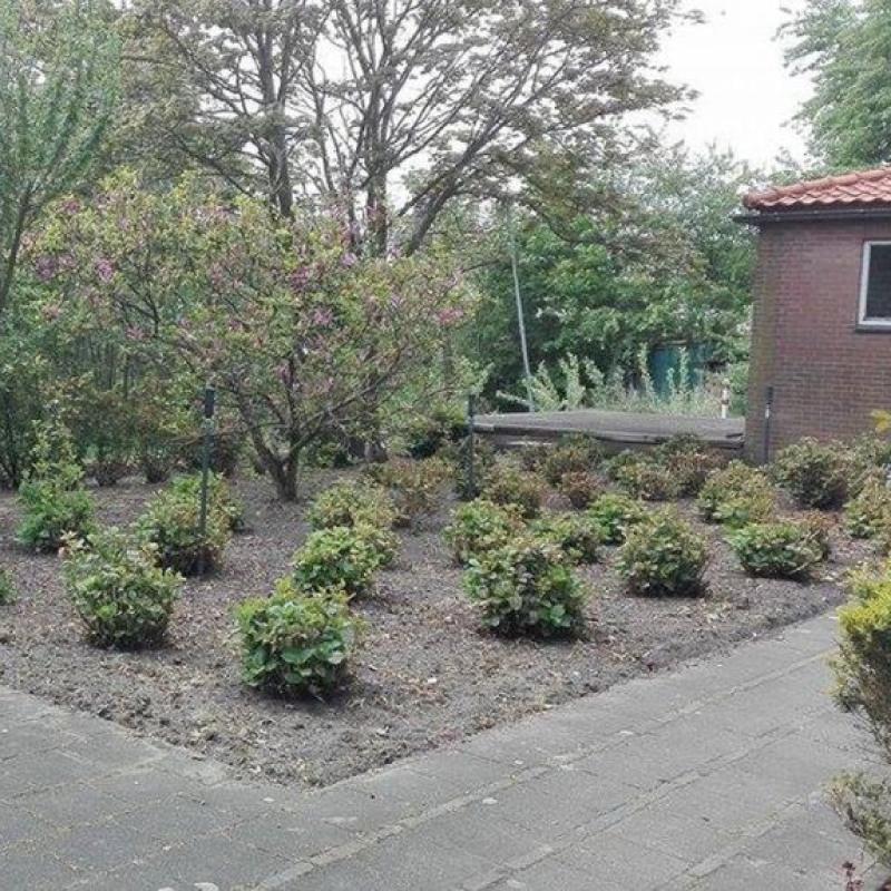 Dom z ogrodem w Holandii